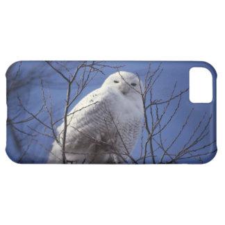 Snowy Owl - White Bird against a Sapphire Blue Sky iPhone 5C Cover