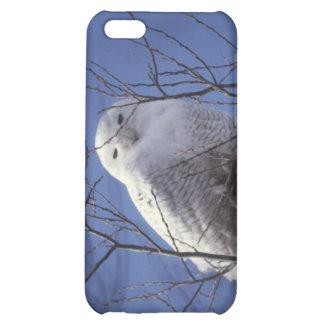Snowy Owl - White Bird against a Sapphire Blue Sky iPhone 5C Case