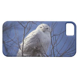 Snowy Owl - White Bird against a Sapphire Blue Sky iPhone SE/5/5s Case