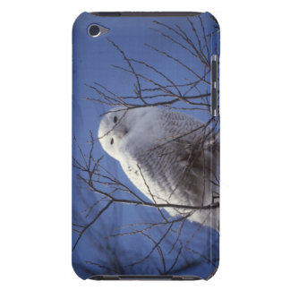 Snowy Owl - White Bird against a Sapphire Blue Sky iPod Touch Cover