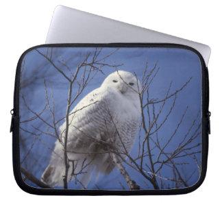 Snowy Owl - White Bird against a Sapphire Blue Sky Laptop Computer Sleeve