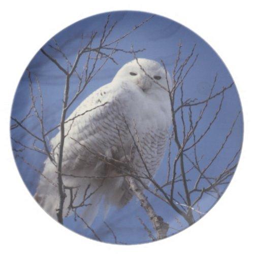 Snowy Owl - White Bird against a Sapphire Blue Sky Melamine Plate