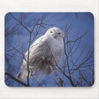 Snowy Owl - White Bird against a Sapphire Blue Sky Mouse Pad