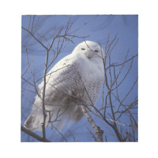 Snowy Owl - White Bird against a Sapphire Blue Sky Notepads
