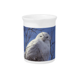 Snowy Owl - White Bird against a Sapphire Blue Sky Pitchers
