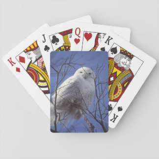 Snowy Owl, White Bird against a Sapphire Blue Sky Playing Cards