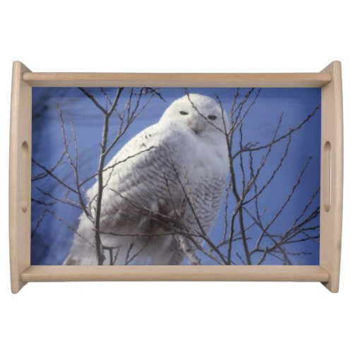 Snowy Owl, White Bird against a Sapphire Blue Sky Serving Tray