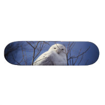 Snowy Owl - White Bird against a Sapphire Blue Sky Skateboard Deck