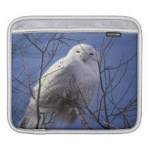 Snowy Owl, White Bird against a Sapphire Blue Sky Sleeve For iPads