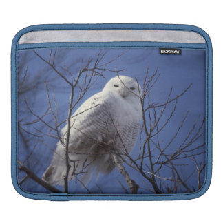 Snowy Owl - White Bird against a Sapphire Blue Sky Sleeves For iPads