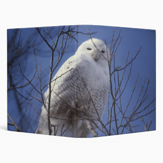 Snowy Owl - White Bird against a Sapphire Blue Sky Vinyl Binder