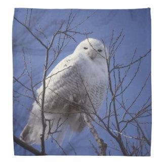 Snowy Owl, White Bird against a Sapphire Blue Sky Bandanna