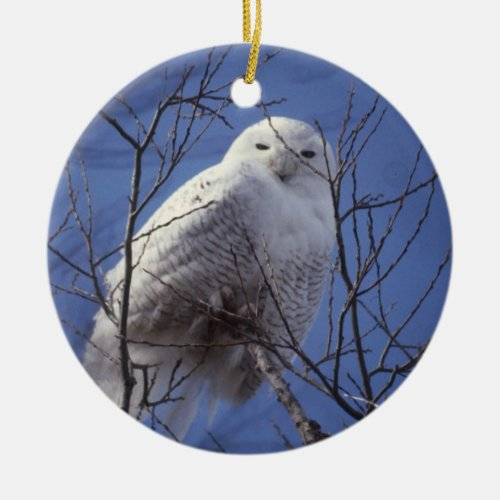Snowy Owl - White Bird in Sapphire Blue Sky 2 side Ceramic Ornament