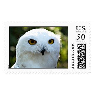 Snowy Owl wildlife postage stamp