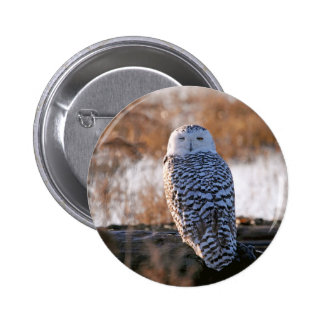 Snowy Owl Winking Pinback Button