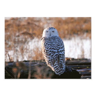 Snowy Owl Winking Card