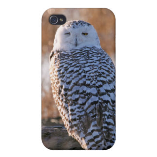 Snowy Owl Winking iPhone 4 Cover