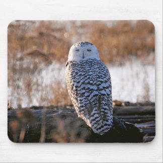 Snowy Owl Winking Mouse Pads