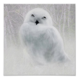 Snowy Owlet Poster