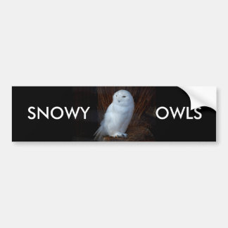 SNOWY OWLS - bumper sticker