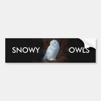 SNOWY OWLS - bumper sticker Car Bumper Sticker