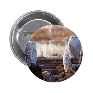 Snowy Owls Photo Pins