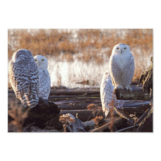 Snowy Owls Photo Card