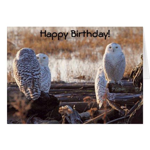 Snowy Owls Photo Greeting Card