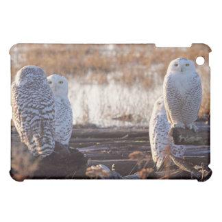 Snowy Owls Photo iPad Mini Cases