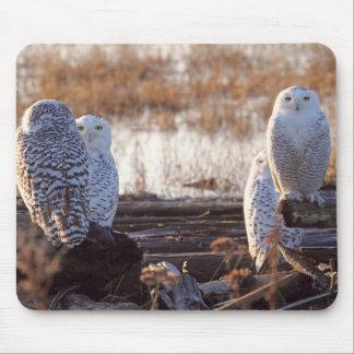 Snowy Owls Photo Mousepad