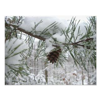 Snowy Pine Branch Photo Print