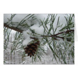Snowy Pine Branch Winter Nature Photography Card