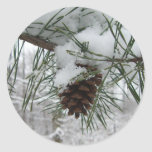Snowy Pine Branch Winter Nature Photography Classic Round Sticker