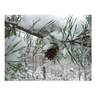 Snowy Pine Branch Winter Nature Photography Postcard