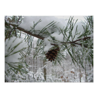 Snowy Pine Branch Winter Nature Photography Poster
