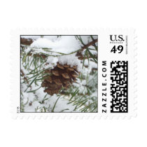Snowy Pine Cone I Winter Nature Photography Postage