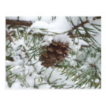 Snowy Pine Cone I Winter Nature Photography Postcard