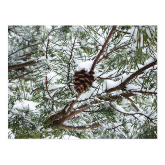 Snowy Pine Cone II Winter Nature Photography Postcard