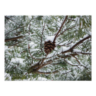 Snowy Pine Cone II Winter Nature Photography Poster