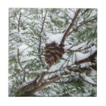 Snowy Pine Cone II Winter Nature Photography Tile
