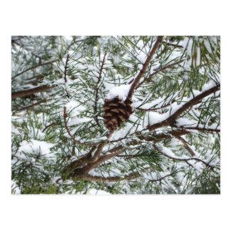 Snowy Pine Cone Postcard
