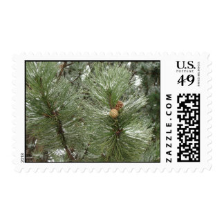 Snowy Pine Cones Postage