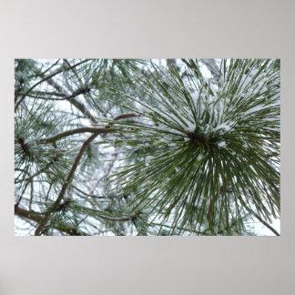 Snowy Pine Needles Poster Print