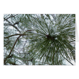 Snowy Pine Needles Winter Nature Photo Card