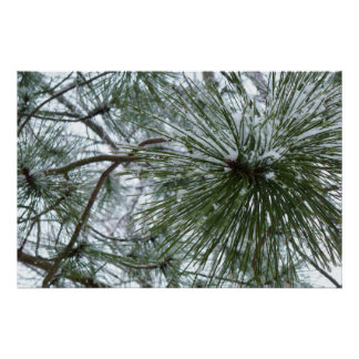 Snowy Pine Needles Winter Nature Photo Poster