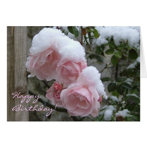 Snowy pink rose happy birthday greeting card zazzle