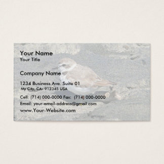 Snowy plover business card