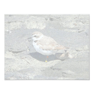 Snowy plover card