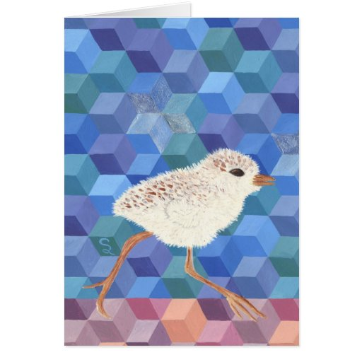 Snowy Plover Chick Greeting Cards
