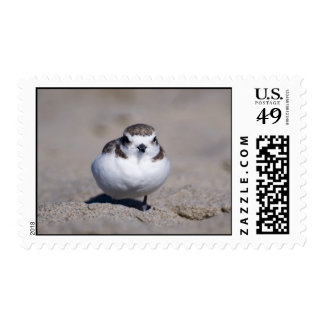 Snowy Plover Postage Stamp